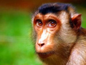 Экскурсия в Сухумский питомник обезьян от Дома отдыха Питиус в Пицунде, Абхазия