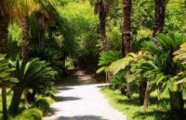 Экскурсия в Сухумский ботанический сад от Дома отдыха Питиус в Пицунде, Абхазия