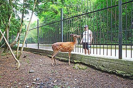Зоопарк (олени. медведи,горные козы,кролики) на территории Дом отдыха Питиус в Пицунде, Абхазия